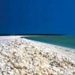 Prédateur Punaise De Lit Meilleur De 普纳鲁吾 Puna Lu 海滩位于夏威夷 其深黑色的沙子在火山