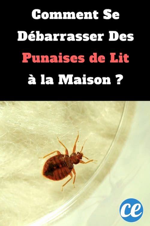 Produit Anti Punaise De Lit Génial Produit Anti Punaise De Lit Castorama S Produit Anti Punaise De