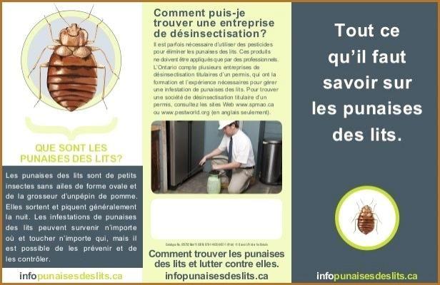 Produit Contre Les Punaises De Lit Bel Anti Punaise De Lit Efficace Zochrim
