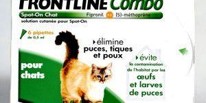 Punaise De Lit Chat Impressionnant Ceremei Page 83 Sur 150
