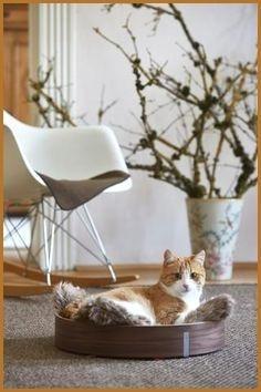 Punaise De Lit Chat Nouveau Lit Pour Chat Design Zochrim