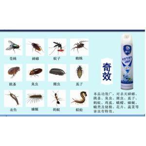 Punaise De Lit Comment Les Tuer Fraîche Spray Anti Punaises De Lit Insecticide Punaise De Lit