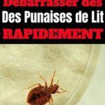 Punaise De Lit Comment Les Tuer Nouveau Tricoire Alexandratricoire1 On Pinterest