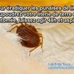 Punaise De Lit Comment Les Tuer Unique Spray Anti Punaises De Lit Insecticide Punaise De Lit