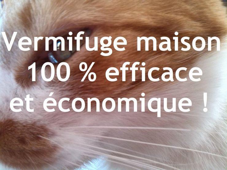 Punaise De Lit Marseille Génial Puce De Lit Rem De Extraordinaire Puce De Parquet Hd Pour Notre