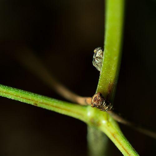 17 best insecte images on Pinterest