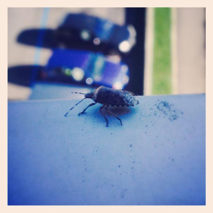 Punaise De Lit Pourquoi Bel 17 Best Insecte Images On Pinterest