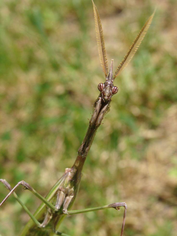 Punaise De Lit Pourquoi De Luxe 17 Best Insecte Images On Pinterest