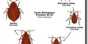 Punaise De Lit Terre De Diatomée Charmant Bug Shop Page 178 Sur 182