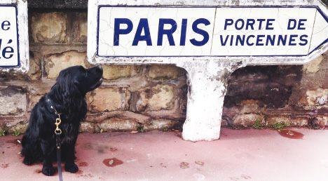 Punaise De Lit Traitement Professionnel Nouveau Punaises De Lit Paris