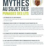 Punaise De Lit Vetement Charmant Punaises Des Lits Bed Bugs