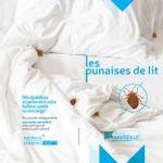 Punaise De Lit Vetement Le Luxe Ville De Marseille