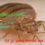 Punaises De Lit Extermination Luxe Traitement Punaise De Lit Prix Pin By Bugator Traitement Punaise De