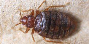 Se Débarrasser Des Punaises De Lit Charmant Bug Shop Page 178 Sur 182