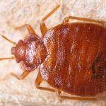 Se Débarrasser Punaise De Lit Nouveau Bug Shop Page 178 Sur 182