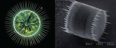 Terre De Diatomée Punaise De Lit Avis Charmant La Terre De Diatomée Un Insecticide Naturel Punaise De