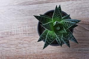 Tete De Lit Fait Maison Impressionnant 6 Plantes Pour Purifier L Air De Votre Chambre