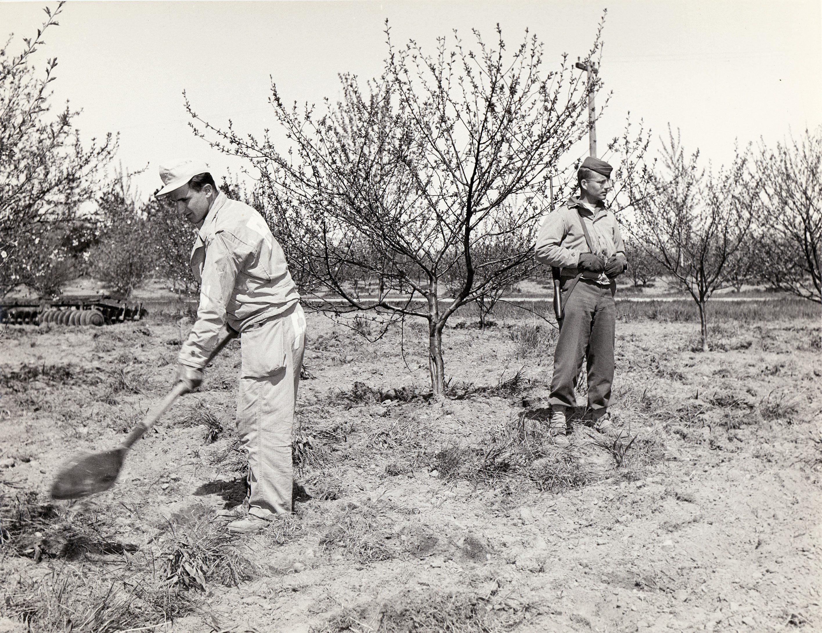 Tour De Lit Fille Inspirant the Harvest Of 1945 German Pow Camps Filled Door County S Labor