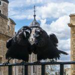 Tour De Lit Original Douce Tower Of London