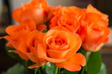 Types of Roses by Name and Color