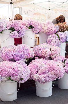 Tour De Lit Violet Magnifique 553 Best Bright & Pretty Things Images