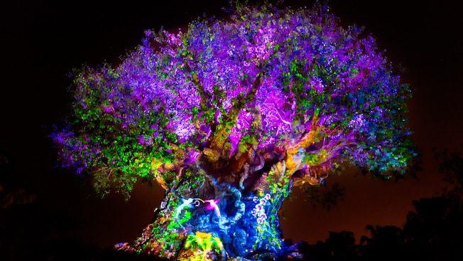 Tour De Lit Violet Unique Tree Of Life Animal Kingdom attractions