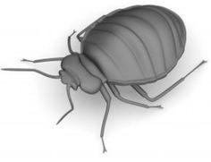 Trace Punaise De Lit Bel 36 Best Bed Bugs Reme S For House Images