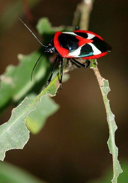 Traitement Punaise De Lit Paris Belle 17 Best Insecte Images On Pinterest
