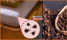 Truc De Grand Mere Contre Les Punaises De Lit Impressionnant 134 Meilleures Images Du Tableau Insectes