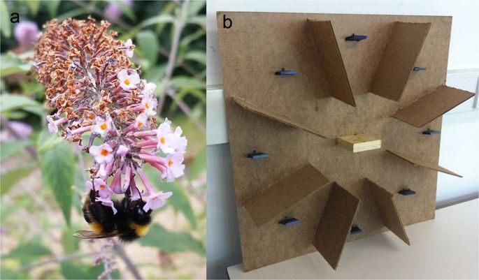 Truc De Grand Mere Contre Les Punaises De Lit Impressionnant Des Nouvelles Des Insectes Les épinlges