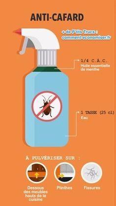 Truc De Grand Mere Contre Les Punaises De Lit Inspirant 134 Meilleures Images Du Tableau Insectes