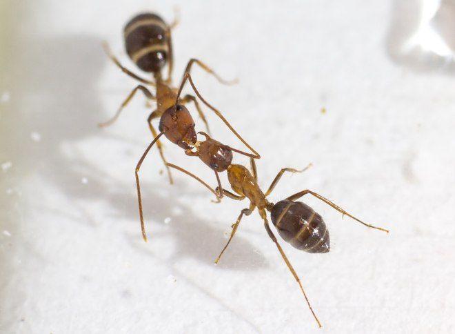 Truc De Grand Mere Contre Les Punaises De Lit Magnifique Des Nouvelles Des Insectes Les épinlges