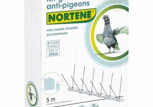 Produit Anti Punaise De Lit Le Luxe Pic Anti Pigeon Mr Bricolage Inspiré Housse Anti Punaise De Lit