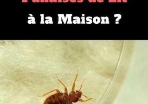 Punaises De Lit Extermination Génial Les 48 Meilleur Punaises De Jardin Image