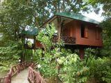 Tour De Lit Jungle Frais Khao sok National Park Day Trip From Khao Lak Review Of Khao sok