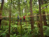 Tour De Lit Jungle Impressionnant Redwoods Treewalk Rotorua